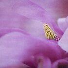 magnolia dream II (blue) by hannes cmarits
