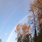 Rainbow & Trees2... by Photos55