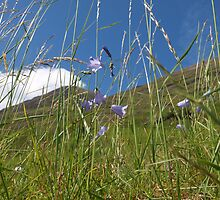 Through the Glen - Harebell by kalaryder
