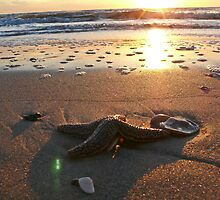 Sunrise Starfish by keeganspera