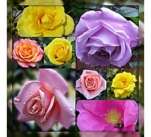Just Roses Collage Photographic Print