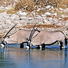 Oryx Drinking by Graeme  Hyde