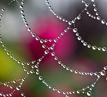 Baubles, bangles & beads by Celeste Mookherjee
