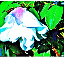 Abstracted Rose Photographic Print