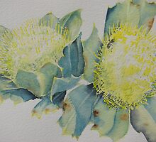 Yellow Banksia by swannymum