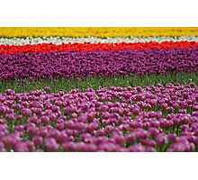 Waves Of Color Photographic Print