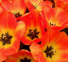 A Burst Of Orange by Debbie Stika