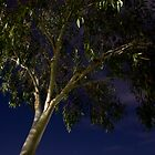 Night Gum by sandralee1989