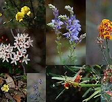 Collage of Wild Flowers found in the Conimbla National Park NSW Australia by geoffgrattan