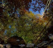 Reflective Stream by brianallanson