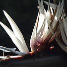 Bird-of-paradise flower in the morning sun - Flor Del Parajo Del Paraiso En La Luz De La Mañana by Bernhard Matejka