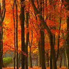 Orange Forest by reindeer