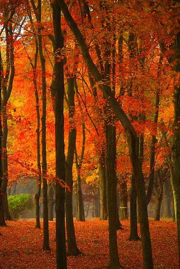 Orange Forest by reindeer
