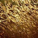Autumn Gold by Jeannette Sheehy