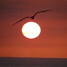 Ocean, sun, sky and bird III by Bernhard Matejka