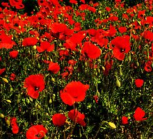 Poppy Fields by JEZ22
