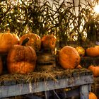 Autumn Pumpkins by Mari  Wirta