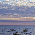Nightcliff Sunset by Brinjen
