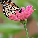 A Butterflies Delight by kkphoto1