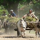 Bullock wagons, Burma by John Mitchell