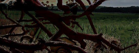 Surreal Field by Jessica Liatys