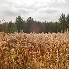 Fall Flowering Weeds by Gary Chapple