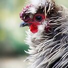 Frizzle the Rooster by Doty