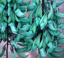 Jade Vine Flower Cluster by Kerryn Madsen-Pietsch