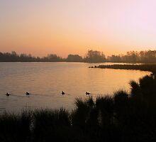 Goodmorning in the Wedlands by ienemien