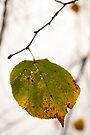Autumn leaf by David Isaacson