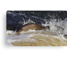 Safe oot, safe in. Canvas Print