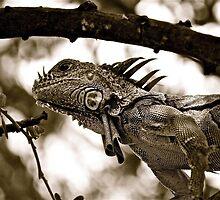 Iguana in Sayulita, Mexico, B&W by Jessica Karran