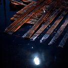 Driftwood in the Moonlight by Rene Fuller