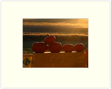 Orange Sunshine by Brenda Dahl