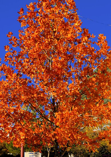 Blue and Orange-  by Brenda Dahl