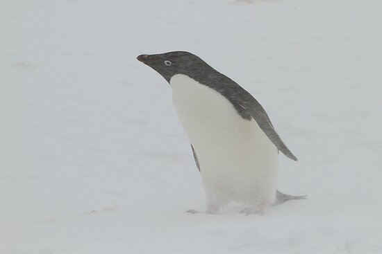 Weather as normal at Brown's Bluff on the Antarctic Peninsula  by Coreena Vieth