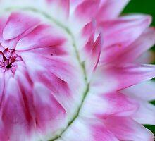 paper daisy by Cheryl Ribeiro