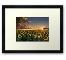 SunFlowers to the Setting Sun Framed Print