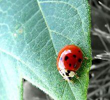 Ladybug by Sheri Schluter