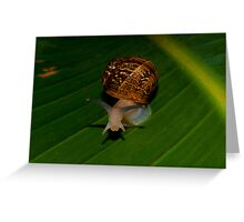 A Snale  (What Are You Looking At) Greeting Card