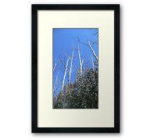 Alpine Ash Forest, Mt Buffalo Framed Print