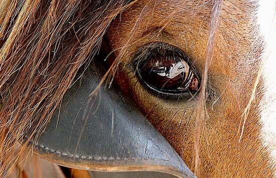 eye of the clydesdale by Steve Scully