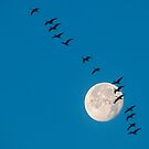 The moon and the geese 2 by THHoang