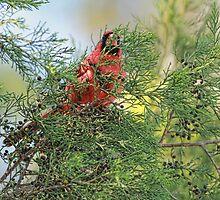 Hiding In The Cedar by Deborah  Benoit