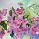 Bougainvillea  by Ann Mortimer