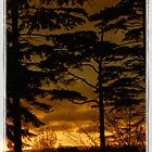 Tree Silouette v3-framed by ©FoxfireGallery / FloorOne Photography