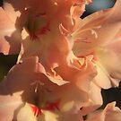 Gladioli of November by Pamela Jayne Smith