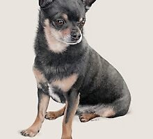 Chihuahua by StephDix