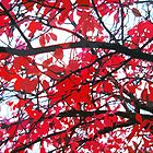 Red leaves branches by cycreation