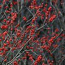 Winter Berries by Jeannette Sheehy